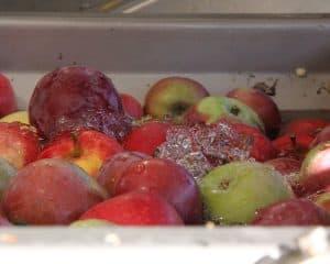 apples with water flowing through in a Kreuzmayr Belt Press