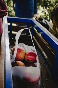 Cider apples in bag