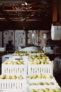bins of cider apple