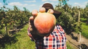 Man holding an apple in a cider orchard