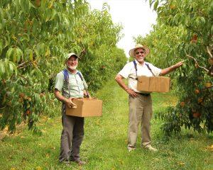kauffman fruit farm orchard