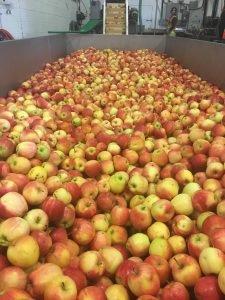 apple basin at BCTF