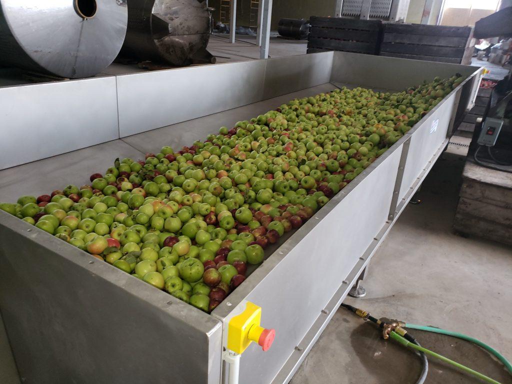 Apples in a Kreuzmayr Infeed Bunker